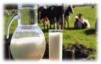 fotos de copo e caneca de leite